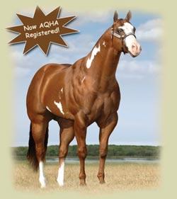 Rockin M Inc World Class Paint Horses And Quarter Horses